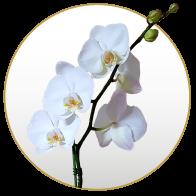 Orquideas Addict